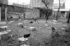 Chaises :: Étrange spectacle. Ici se trouvait il y a peu un bâtiment temporaire de l'école primaire située en arrière-plan, vue de la Kloosterstraat...Le préfabriqué est parti, les chaises sont restées.