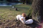 Lapins :: Quelle bonne idée d'avoir lâché tous ces lapins dans le Stadspark.