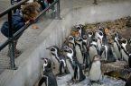 La petite fille et les pingouins